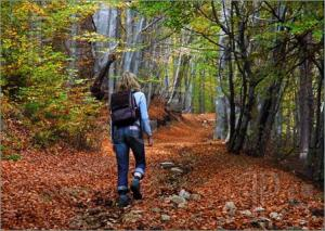 Woman-Tourist-Walking-Autumn-Forest-505021